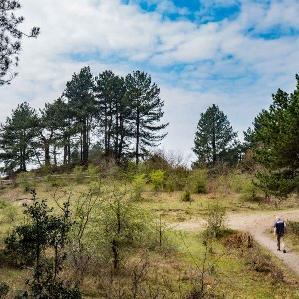 wandelen-in-zandvoort-koningshof-route-blauw-rood-groen-bos-duinen-walking-wandern-holiday-rondwandeling